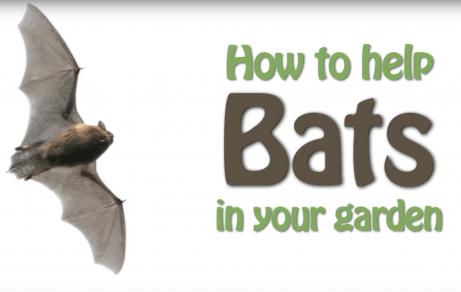 How to help bats in your garden