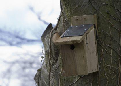 A bird box on a tree