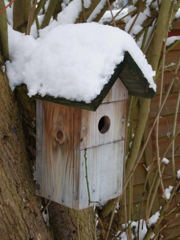 A bird box with snow on its roof