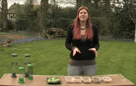 How to set up your bird feeders