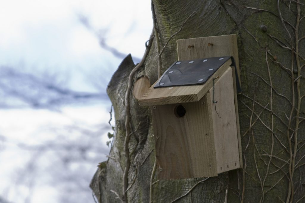 A bird box on a tree