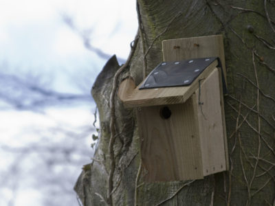 A bird box on a tree - wildlife gardening for birds