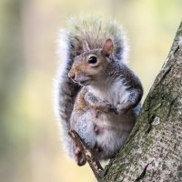grey-squirrel-in-the-garden_smaller