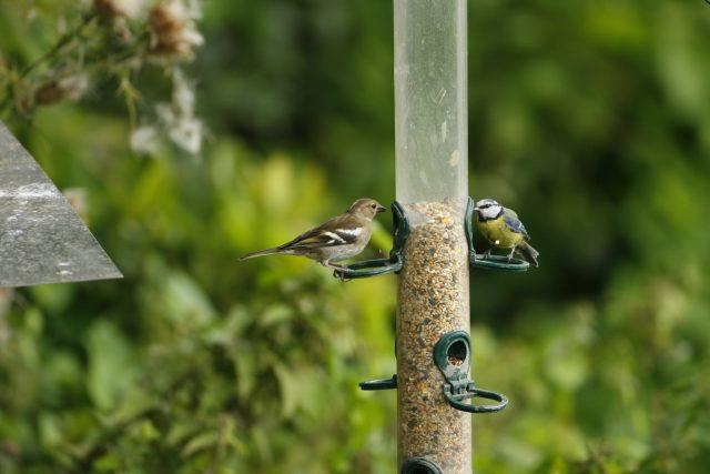 Birds on a feeder - wildlife gardening for birds