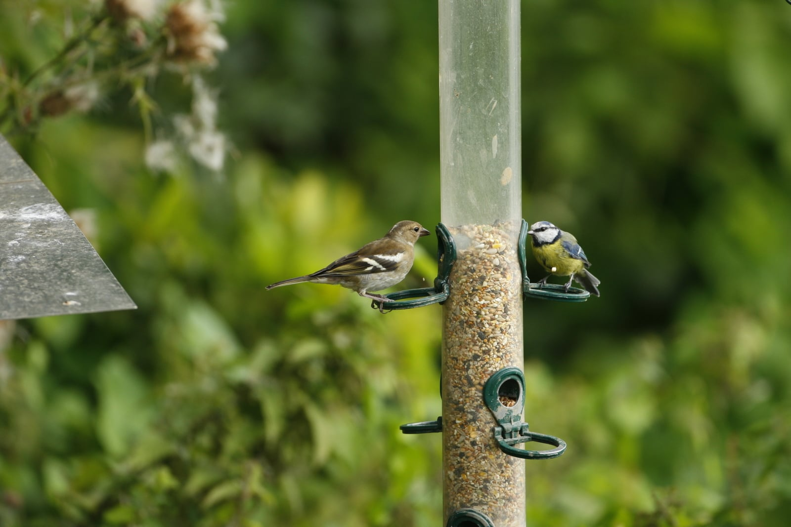 Birds on a feeder - wildlife gardening for birds