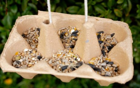 How to make an egg box bird feeder
