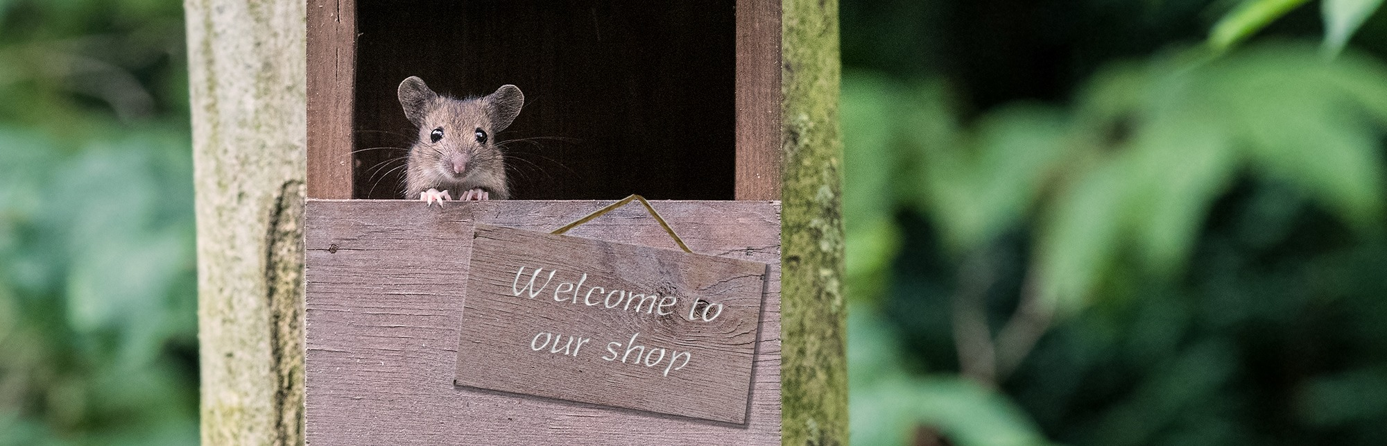A wood mouse peeking out of a nest box with a sign that reads Welcome to our shop