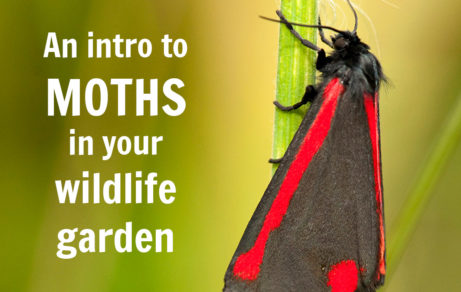 An introduction to moths