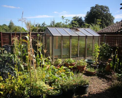 Greenhouse in vegetable garden